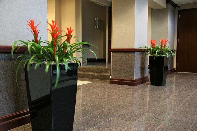 Interior Plant Service