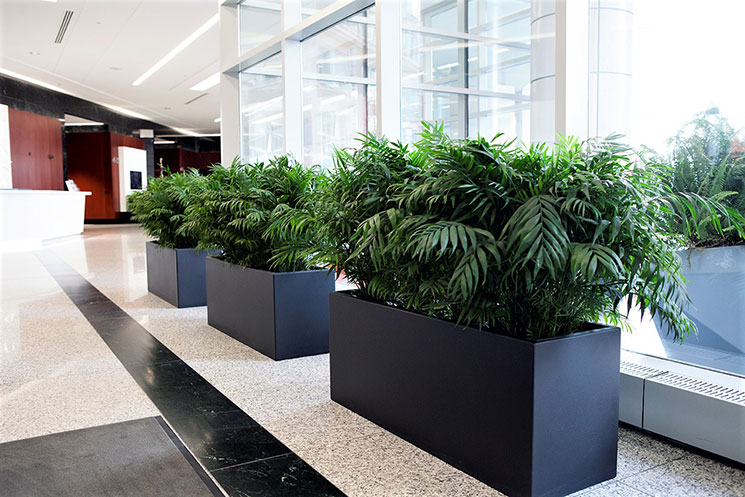 Interior Plant Service For Offices Restaurants Or Any Successful Business